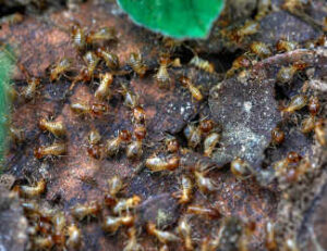 Landmark Home Inspections Termite Inspection Service